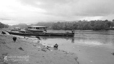 Amazonas 19